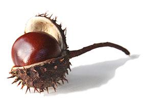 Chestnut_3x2_72dpi
